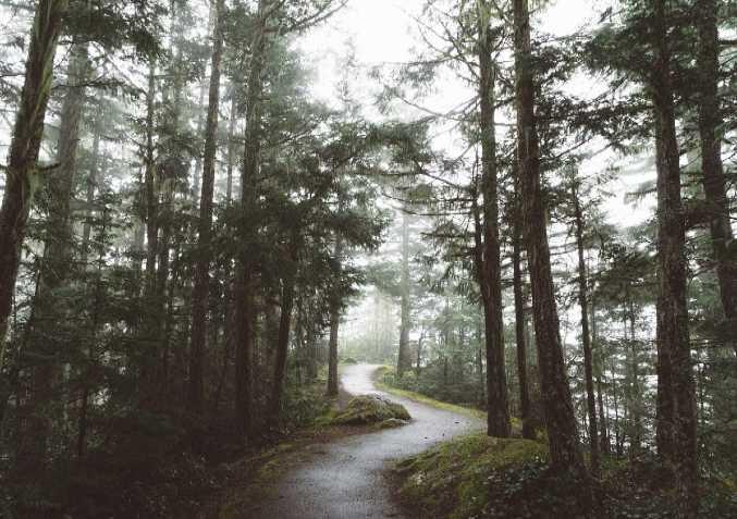 Save Forest Habitat