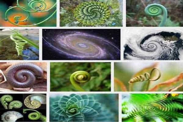 Harness the Strength of the Spiral Symbol