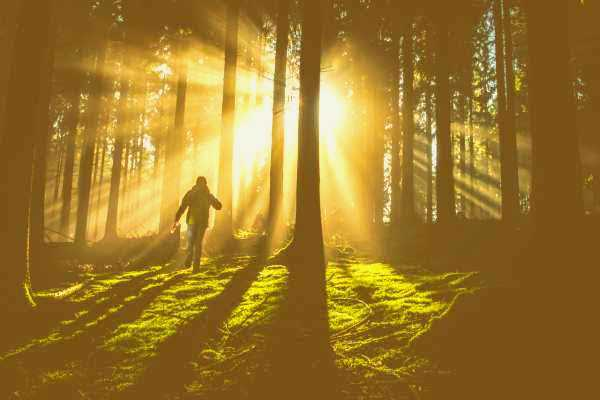 A Forest Bathing Guide for Nature Lovers