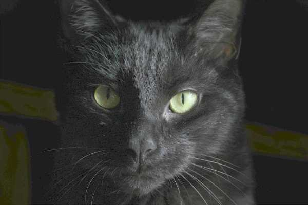 Black Cat Analogy ― Looking for A Black Cat in a Dark Room