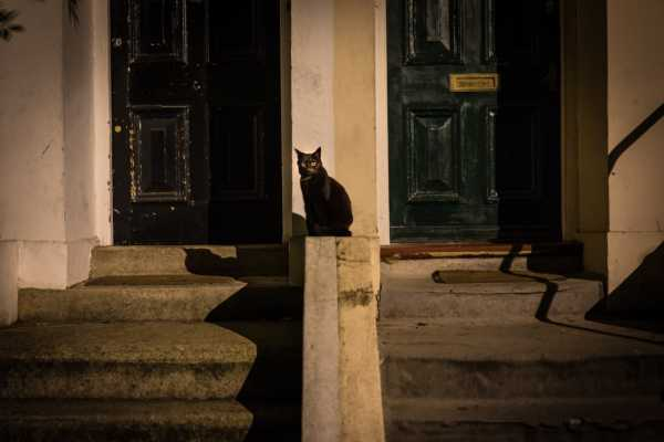 Looking for A Black Cat in a Dark Room