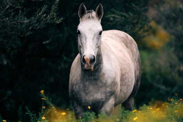 Meditation Troubleshooting Strategy — Befriending a Wild Horse