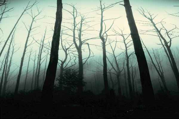 paranormal trees