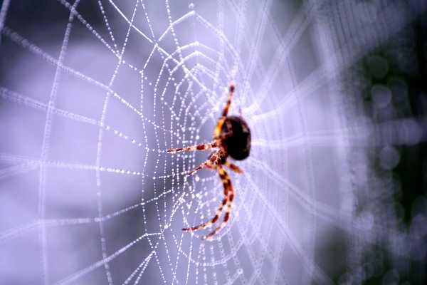 Web of Religion
