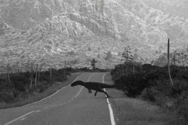 A Velociraptor On The Road