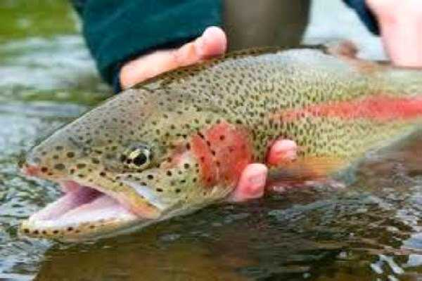 Program People to Act like a Trout ― Behavior Modification