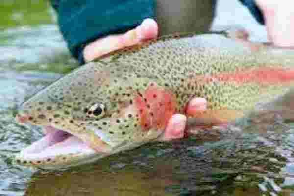 Program People to Behave like a Trout Behavior Modification