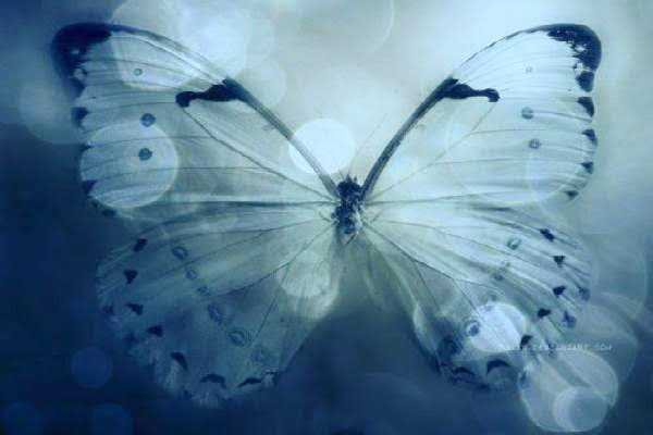 Become a Beautiful Butterfly the lesson of the butterfly