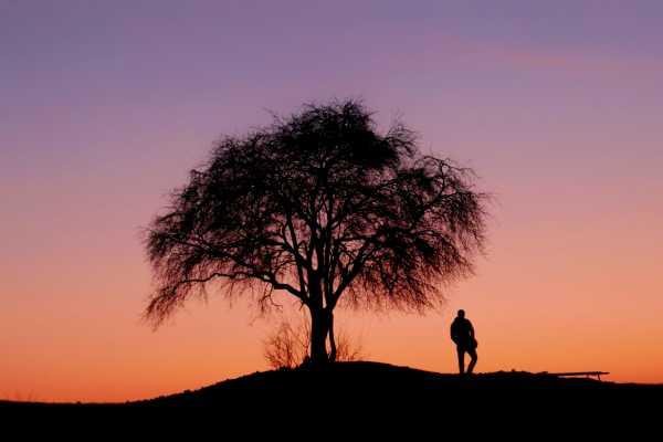 Eightfold Path Tree of Knowledge