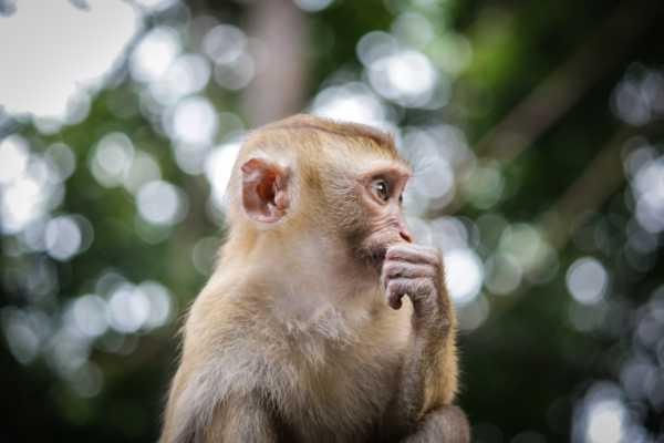Our Monkey Brain ― Taking Control of The Primitive Mind