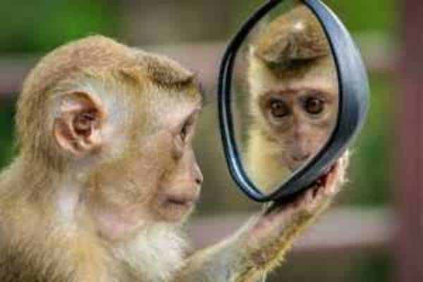 Our Monkey Brain Taking Control of The Primitive Mind