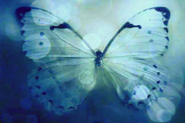 become a beautiful butterfly the lesson of the butterfly story becoming a butterfly
