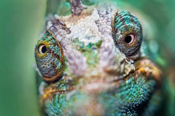reptilian brain lizard brain