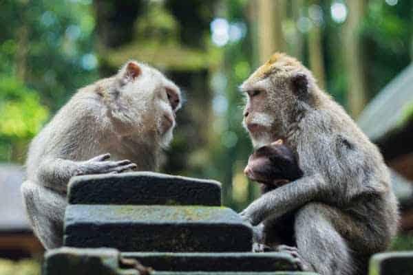 Critical Thinking Skills — Common Sense and Logic